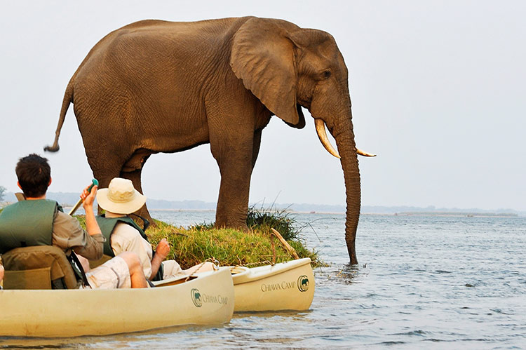 Out of the Ordinary: Canoe Safaris on the Zambezi River