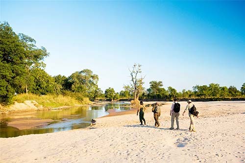 South Luangwa Walking