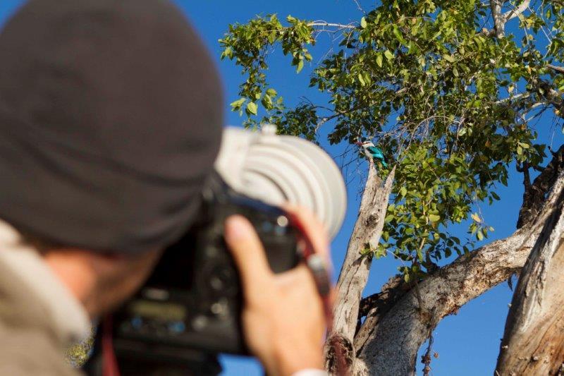 Camera Birds Chobe Savannah 2 DDS