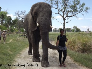 Kagiso elephant interaction at Stanleys