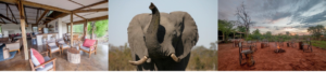 Chobe Elephant Camp Highlights