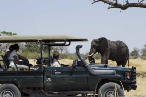 game drive, botswana, safari, elephant