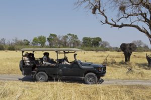 game drive elephant safari botswana