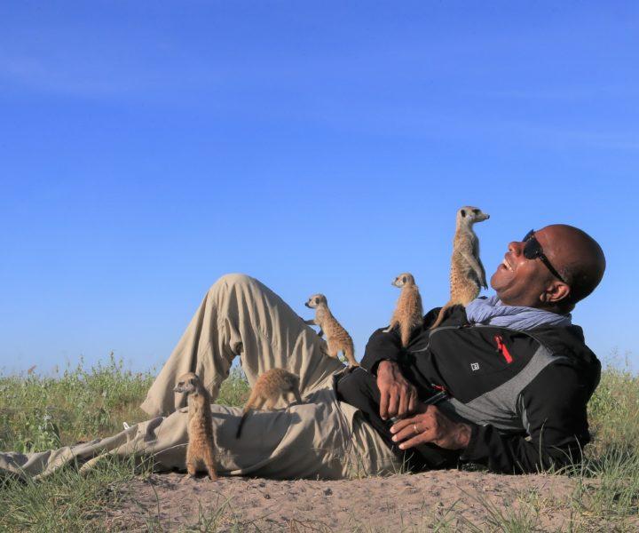 jacks camp meerkats botswana safari specialists natural selection