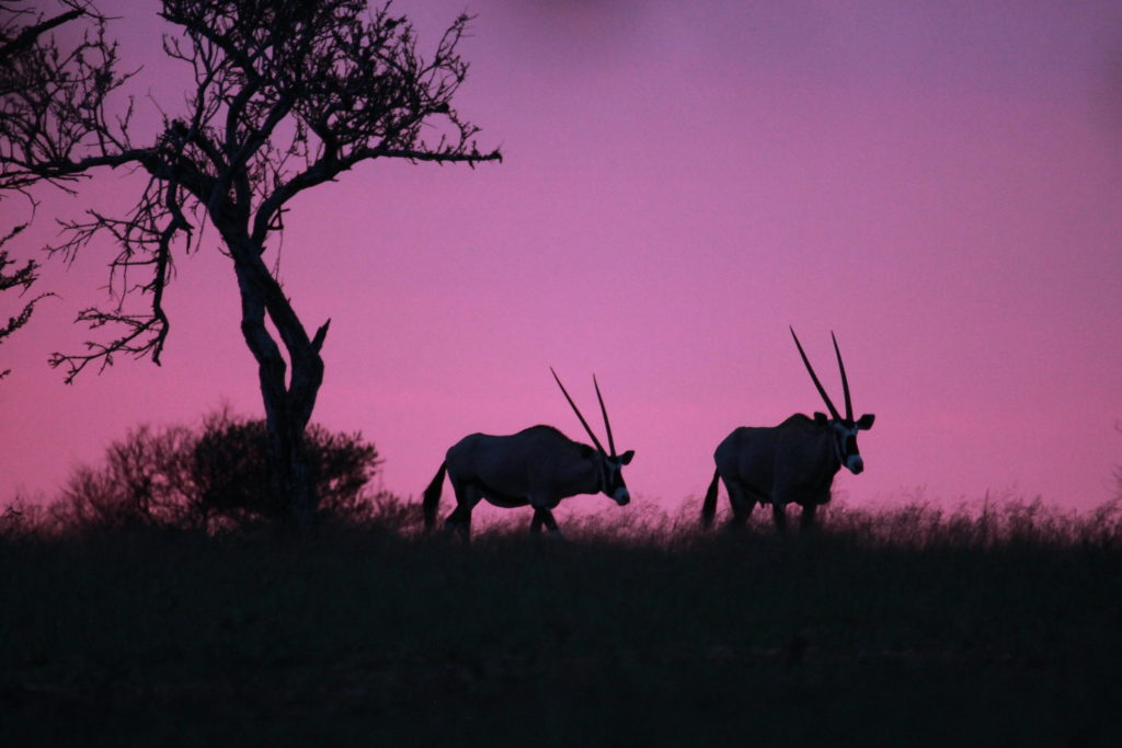 okonjima_sunset eland namibia safari specialists