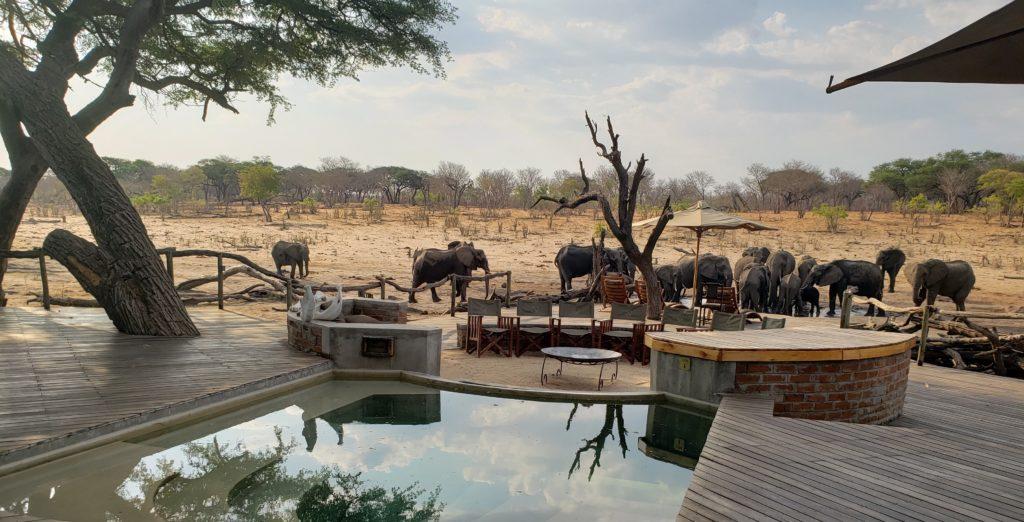 Safari Specialists Zimbabwe Acacia elephants