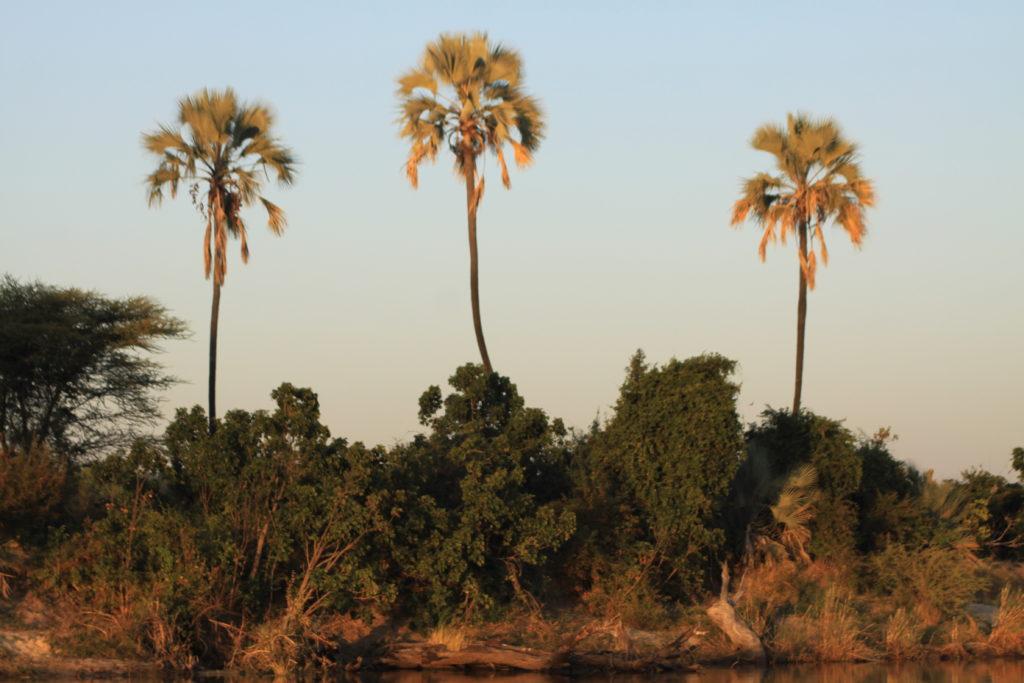 Safari Specialists Zimbabwe Old Drift Zambezi